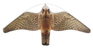 stopgull-falcon