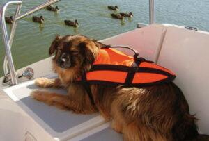 hundeschwimmhilfe